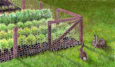 rabbit garden keeping rabbits out of the garden bonnie plants