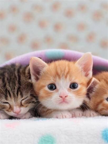 Cat Tabby Kittens Face Lying Ipad Air