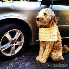 1000 images about dogs on pinterest goldendoodle for Expensive dog toys