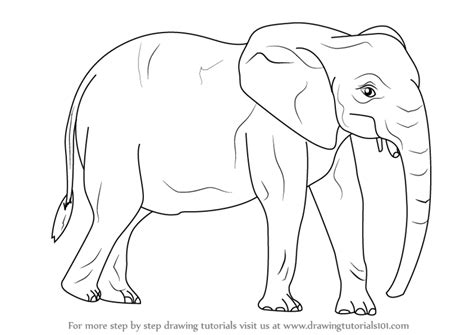 easy  draw wild animals pictures  pin  pinterest