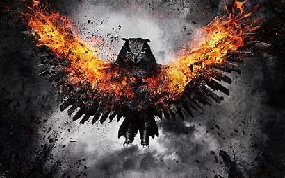 Fire Owl Wings Bird Background Wallpapers Flap