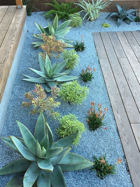 outdoor succulent plants 17 best images about succulent landscaping on pinterest gardens red plants and drought tolerant