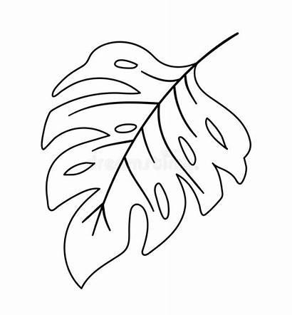 Outline Leaf Monstera Tropical Plant Coloring Jungle