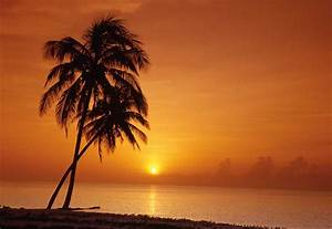 sunset palm tree pics