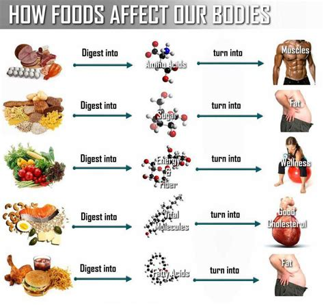 cuisine you what happens to food after you eat it positivemed
