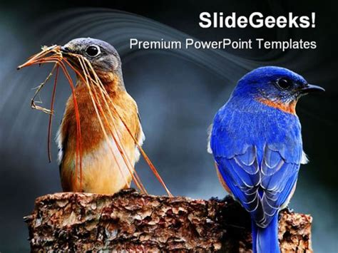 blue birds animals powerpoint templates  powerpoint
