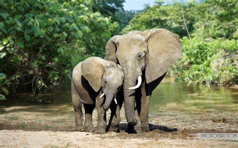 wild animals wallpapers forest animals wallpapers