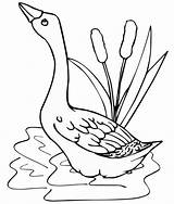 Goose Coloring Pond Pages Cartoon Realistic Funny Children sketch template