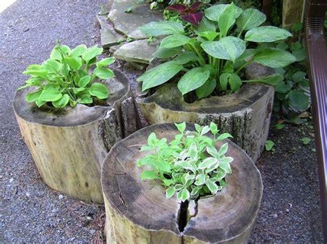 tree stump planters 14 tree stumps turned into gorgeous planters part 2