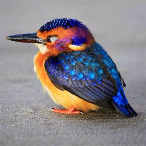 bright bird pictures i like pinterest