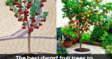 The best dwarf fruit trees to grow in pots #Fruit ...