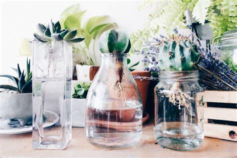วิธีปลูกแคคตัสในน้ำ ปลูกง่ายๆไม่ยุ่งยากทำเองได้ - my home