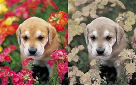 how do dogs see color how do animals see colors how is their vision different