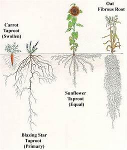 10 best Plant Anatomy I - Leaf, Stem, Root images on ...