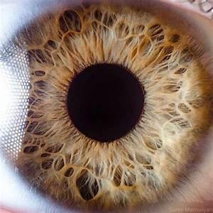 Human Eye Under A Microscope  21 Photos
