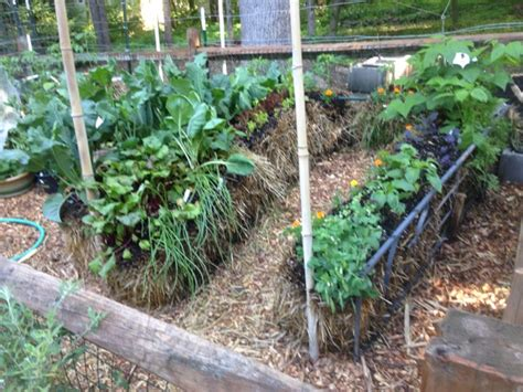 Where To Buy Straw Bales For Gardening by Benefits Of Straw Bale Gardening Hacks And How To
