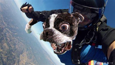 internet hizo una epica batalla de photoshop  este perro