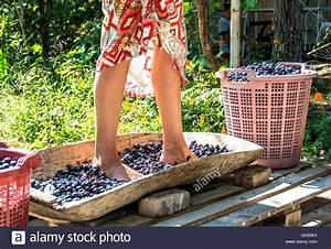 Grape-crushing Foot Stock Photo