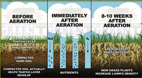 benefits of lawn aeration over seeding aerating why do both eurolawn