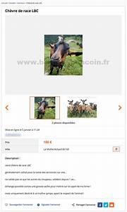 Bon Coin Pays De La Loire : ch vre de race lbc animaux pays de la loire best of le bon coin ~ Gottalentnigeria.com Avis de Voitures