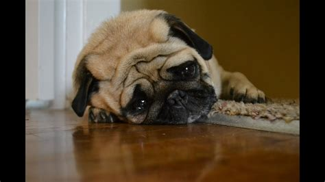 sad dog diary youtube
