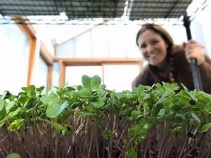 95: Growing Microgreens