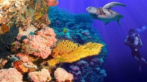 isla verde garbage pollution threaten world jewel
