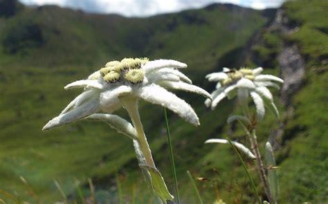 Fiore E Sua Coltivazione