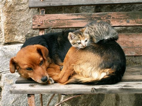 Companion Animal Psychology Cats And Dogs