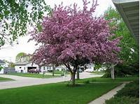 front yard trees images of yards with plants for privacy | Photograph ...