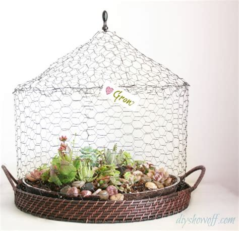 diy wire cloche succulent garden terrariumdiy show