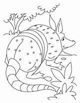Anteater Coloringhome sketch template
