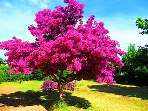 Petit Arbre Persistant : arbre avec feuillage persistant fleur de passion ~ Melissatoandfro.com Idées de Décoration