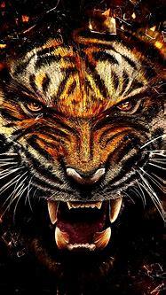 Free HD Wild Tiger Phone Wallpaper...1128