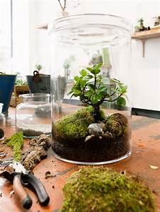 Bonsai Im Glas : pin von bonsai gurus auf bonsai pinterest blumen pflanzen pflanzen und glas ~ Eleganceandgraceweddings.com Haus und Dekorationen