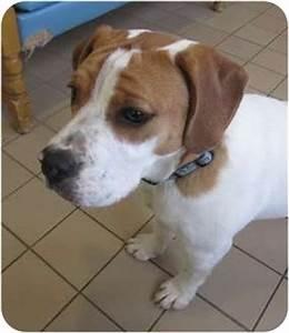 Yogi   Adopted Dog   15791   Jackson, MI   American ...
