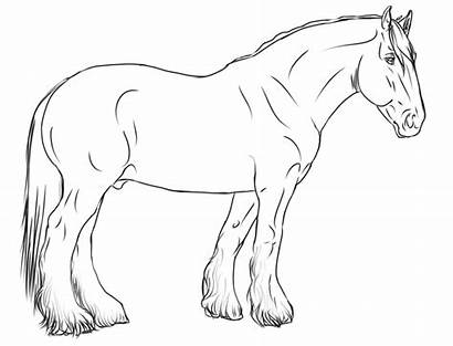 Horse Lineart Shire Coloring Realistic Drawings Gaited