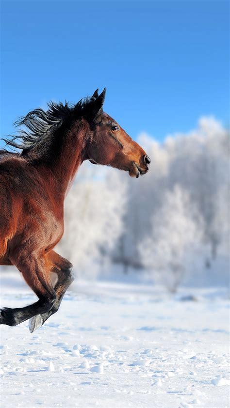 wallpaper horse cute animals snow winter  animals
