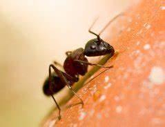 Gegen Ameisen Im Garten : was hilft gegen ameisen im garten tipps ~ Michelbontemps.com Haus und Dekorationen