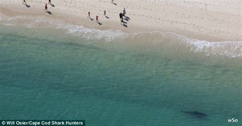 terrifying  reveal sharks lurking  cape