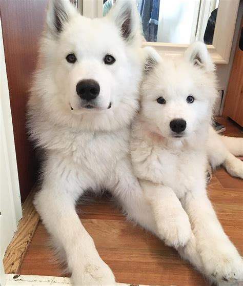 Love Cute Dogs Adorable Dogs Cute Dogs Puppies