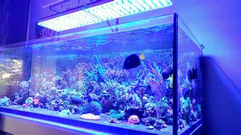 neon led aquarium aquarium led ou neon 28 images neon tetra tank 1 5 gallon cube led aquarium kit travel the