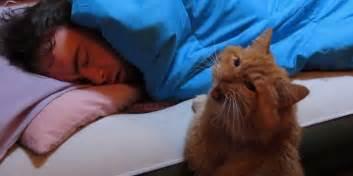 cat alarm clock cat alarm clocks are the best alarm clocks