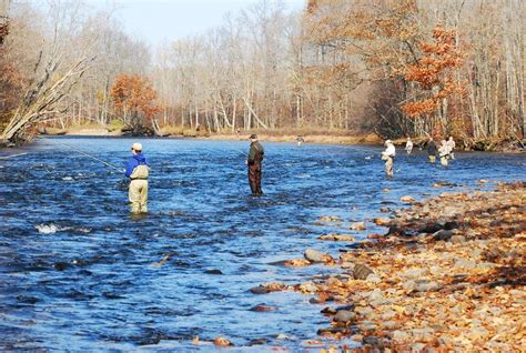fish stocking program boosting lake ontarios viability
