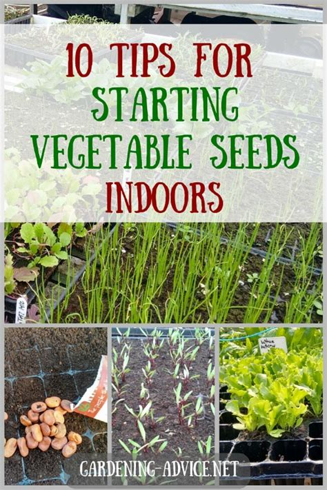 10 tips for starting vegetable seeds indoors
