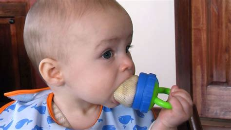 baby mesh feeder baby feeder test