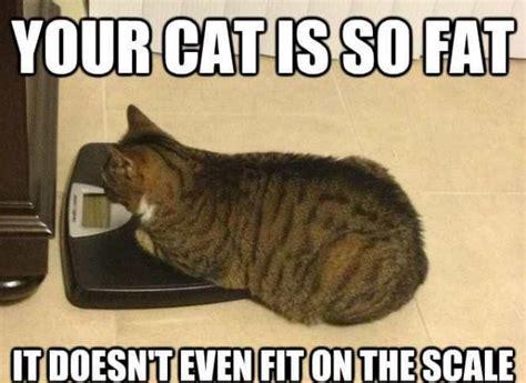 Cat Pic Meme - fat cat meme funny list of cute fat cats and kitties