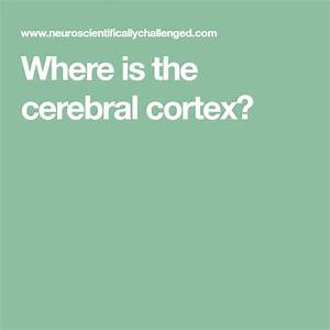 Know Your Brain  Cerebral Cortex
