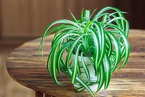Pflanzen Für Gute Raumluft : luftreinigende pflanzen die top 10 plantura ~ A.2002-acura-tl-radio.info Haus und Dekorationen