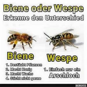 Bienen Und Wespen : lustige spr che ber bienen directdrukken ~ Whattoseeinmadrid.com Haus und Dekorationen
